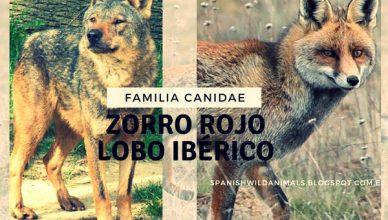 Familia Canidae