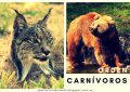 Mamíferos Carnívoros