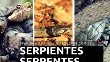 Serpientes, Reptiles