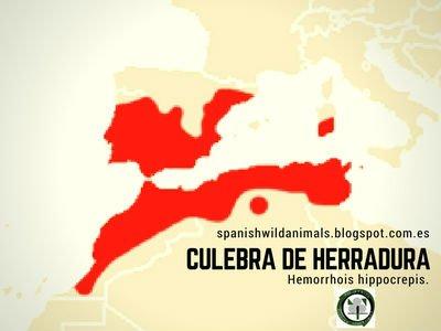 La distribución de la culebra de herradura en la Península Ibérica