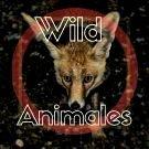 Wild Animales